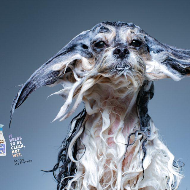 Es imposible que estos anuncios de champú para perros no te hagan sonreír