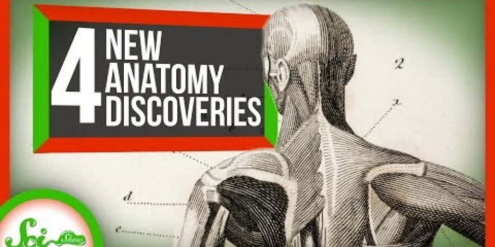 4 Body Parts Discovered in the Last 10 Years