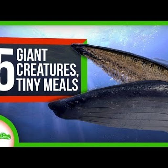 How Giant Creatures Eat Tiny Meals: 5 Fabulous Filter Feeders