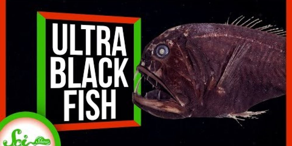How Ultra-Black Fish Disappear into the Deep