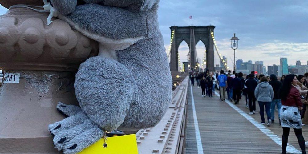 Nueva York se llena de koalas de peluche para conseguir donaciones para Australia