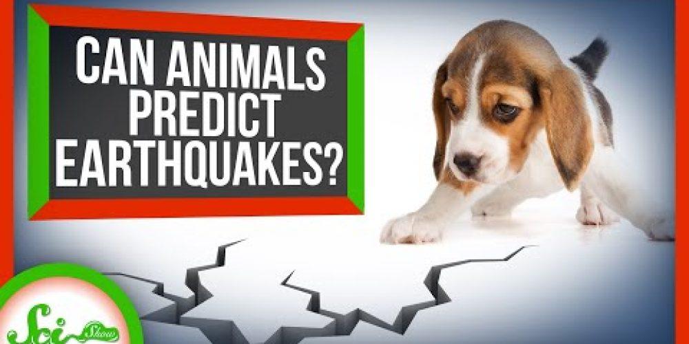 Can Animals Predict Earthquakes?