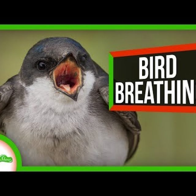 Reptiles' Breathing Hack Helped Birds Dominate the Air