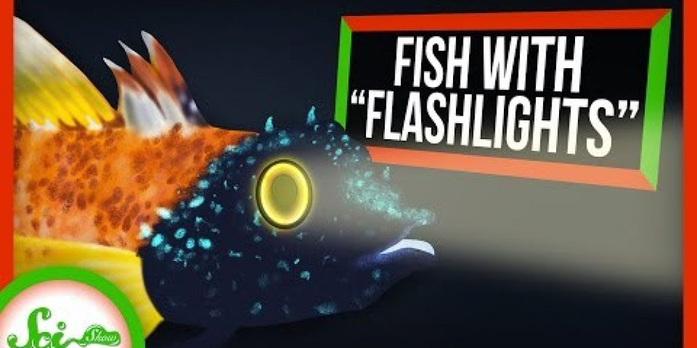 3 Fish With Built-In Flashlights