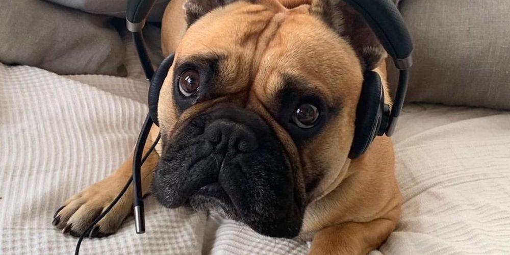 """Esta cuenta de Instagram recopila fotos de perros """"teletrabajando"""" desde casa"""