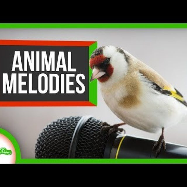 Animal Melodies: 5 of Nature's Sweetest Singers