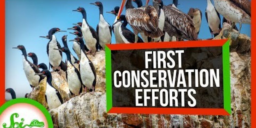 The First Conservation Efforts Protected… Poop?!