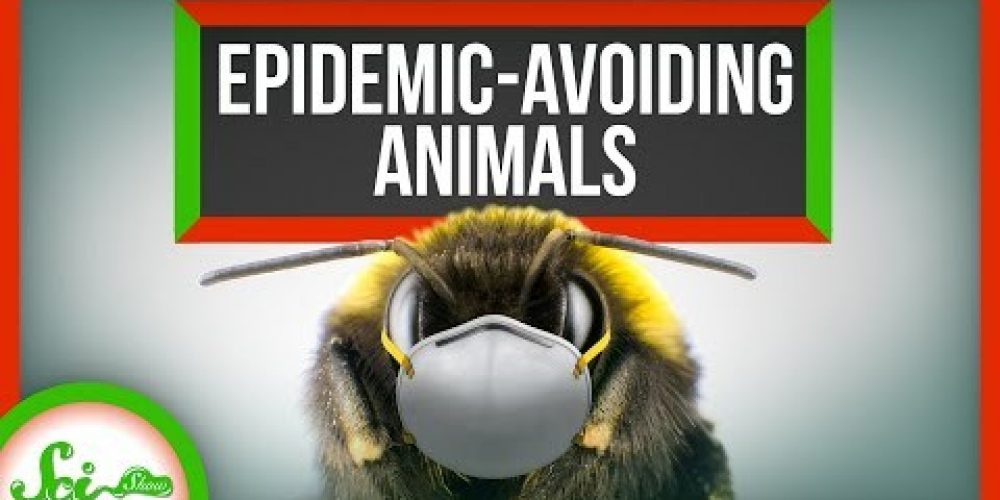 6 Ways Animals Prevent Epidemics