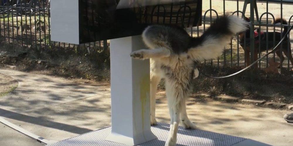 Este mupi hace test de orina a los perros para prevenir y detectar enfermedades