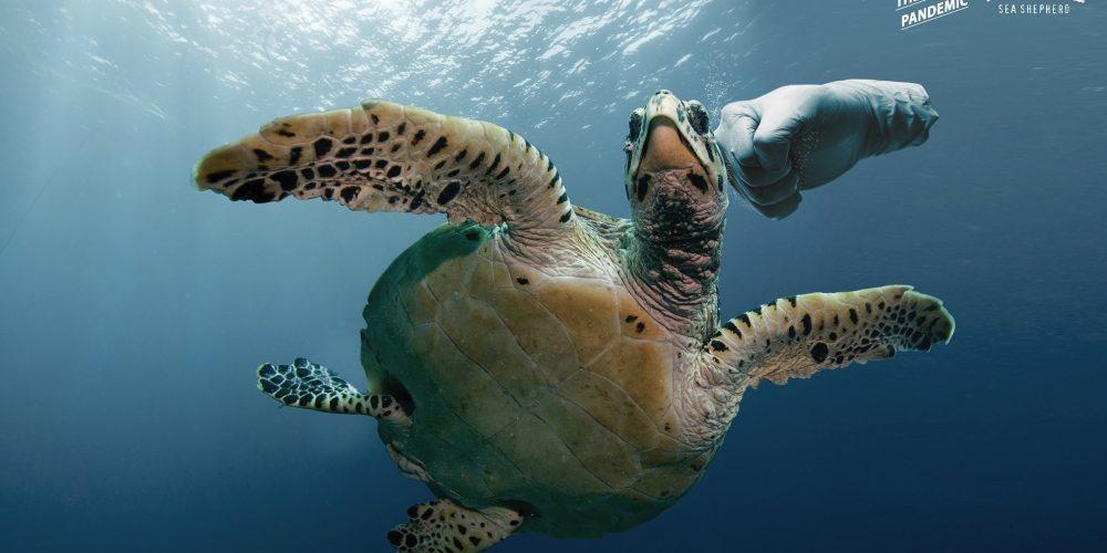 Esta campaña gráfica alerta sobre los peligros de los guantes de látex para los animales marinos